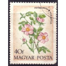 1973, август. Почтовая марка Венгрии. Полевые цветы. 40 филлеров