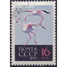 1962, декабрь. Птицы. Фламинго