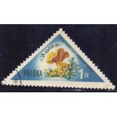 1959 Май Польша Грибы Лисичка Обыкновенная 1 злотый