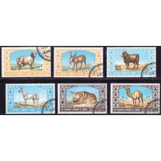 1967 Апрель Иордания Животные