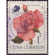 1965, июль. Почтовая марка Кубы. Цветы мира. 1 центаво