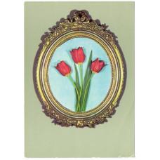 Открытка - Цветы. Тюльпаны. Германия