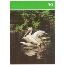 Открытка - Птицы Московского зоопарка. 1988. СССР. №14