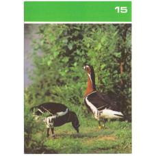 Открытка - Птицы Московского зоопарка. 1988. СССР. №15