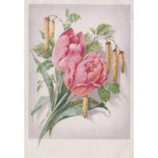 Открытка Тюльпаны. Подписанная