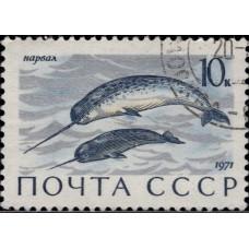 1971, август. Почтовая марка СССР. Млекопитающие — обитатели морей и океанов, омывающих СССР, 10 коп.