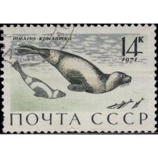 1971, август. Почтовая марка СССР. Млекопитающие — обитатели морей и океанов, омывающих СССР, 14 коп.