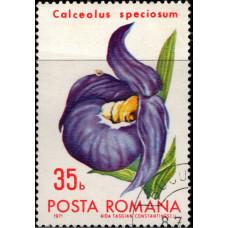 1971, июль. Почтовая марка Румынии. Цветы - Бухарестский ботанический сад, 35B
