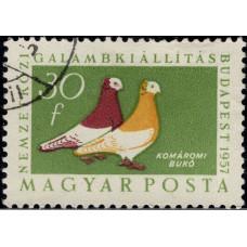 1957, декабрь. Почтовая марка Венгрии. Птицы - Международная выставка голубей, Будапешт, 30f