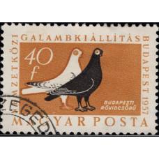 1957, декабрь. Почтовая марка Венгрии. Птицы - Международная выставка голубей, Будапешт, 40f
